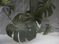 """Biotop"" 2009"