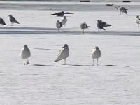 """Gulls"" 2006"