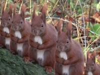 """""""Squirrels"""" 2006"""