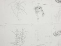 """Study of Studio Plants""  2012"